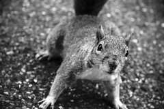 Squirrel | by STCM