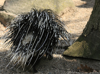 Porcupine | by ktpupp