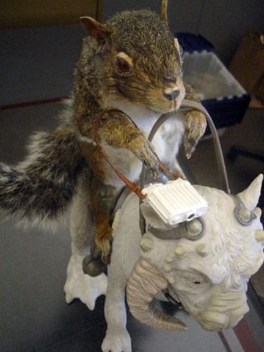 Squirrel riding a Tauntaun | by bonniegrrl