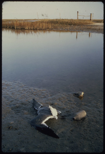 Polluted Area on Gulf Coast: Mustang Island, 100 Miles South of Houston. 02/1972 | by The U.S. National Archives