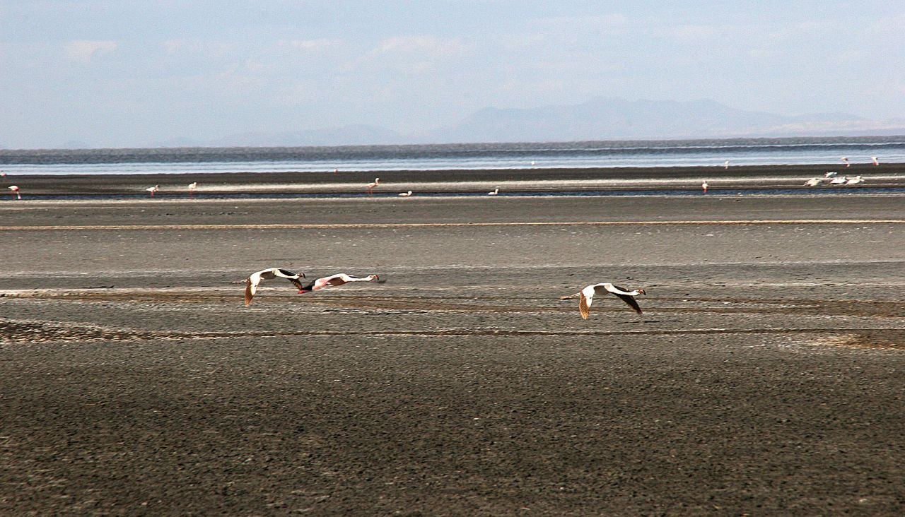 Birds Turned Into Statues At Lake Natron