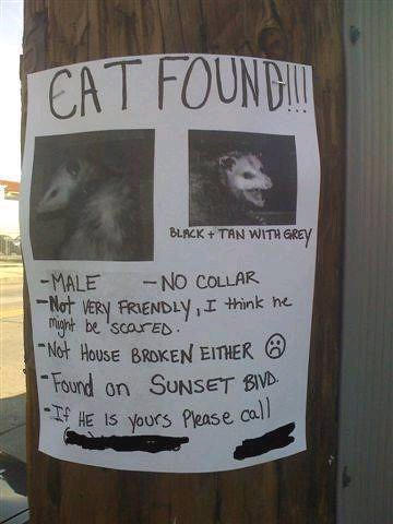 Anyone lose a cat? Cat Found? Lost Cat? Only in LA | by Laurie LS Wright (DoodleBugDezines)