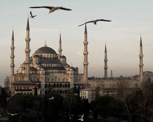 Istanbul Birds in Flight (Color) | by Oberazzi