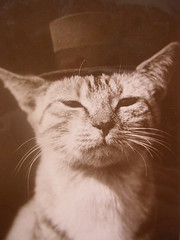 Vintage cat in Top Hat. | by pollyanna.uk
