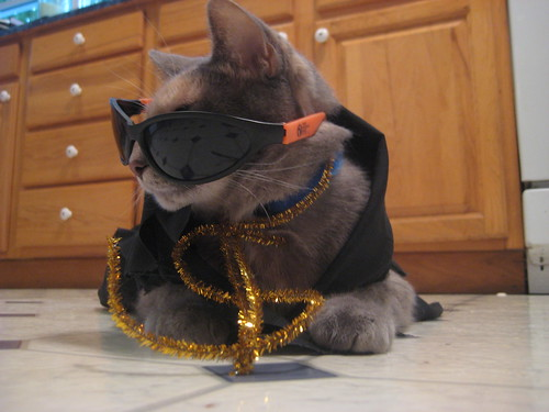rapper cat | by christmasnotebook
