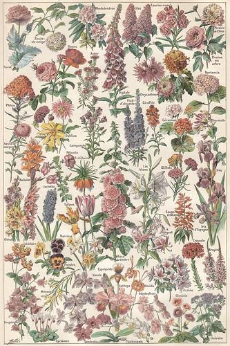 Floral Print High Heel Shoe