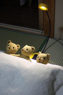 枕に3クマ