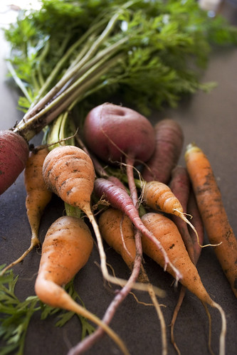 carrots straight from the garden | by gail m tang