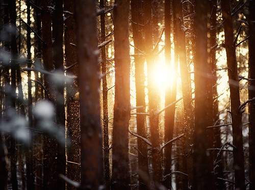 Winter Sun | by Philipp Klinger Photography