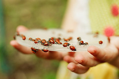 108/365 . . . ladybugs {explored} | by murpheyblue {ali c}