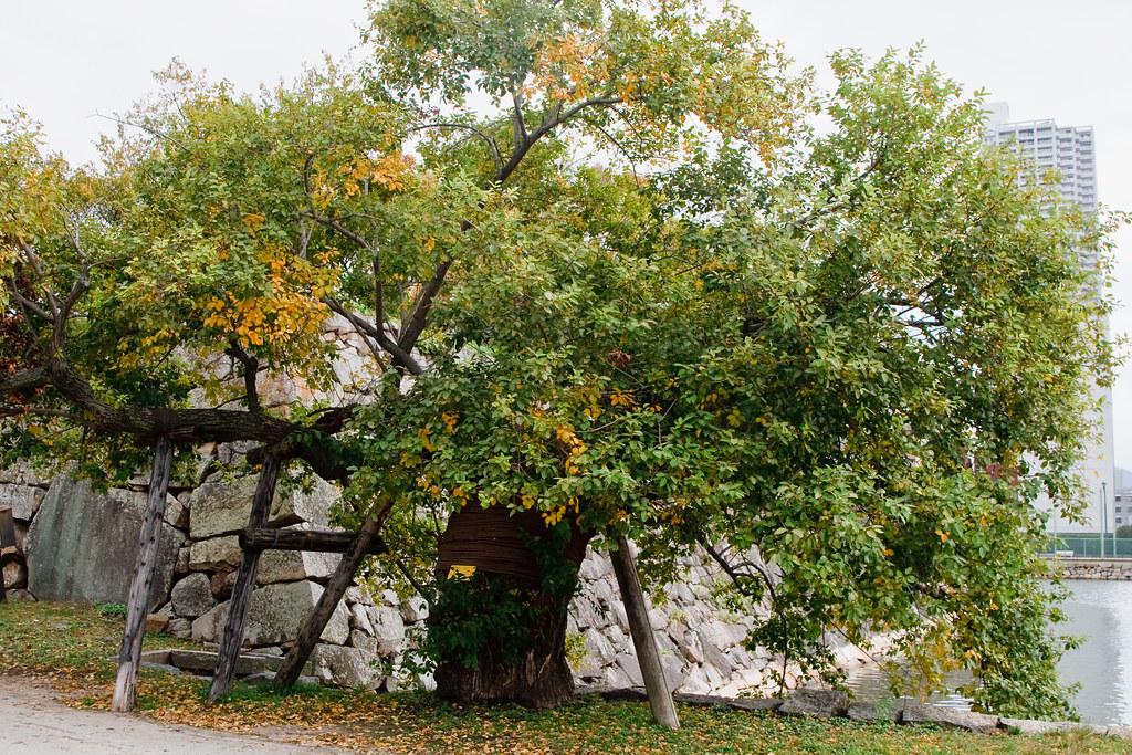 An A-Bombed Tree