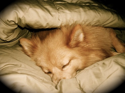 Puppy Sleeps At Foot Of Bed Wont Snuggle