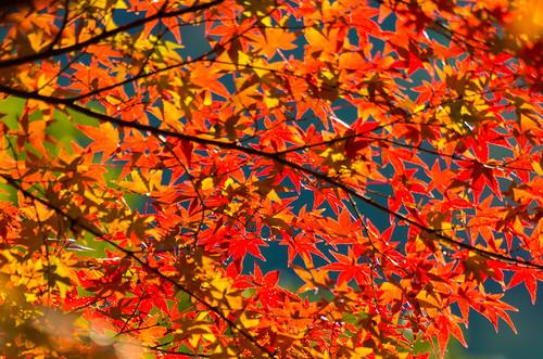 紅葉狩り - 東山公園 18