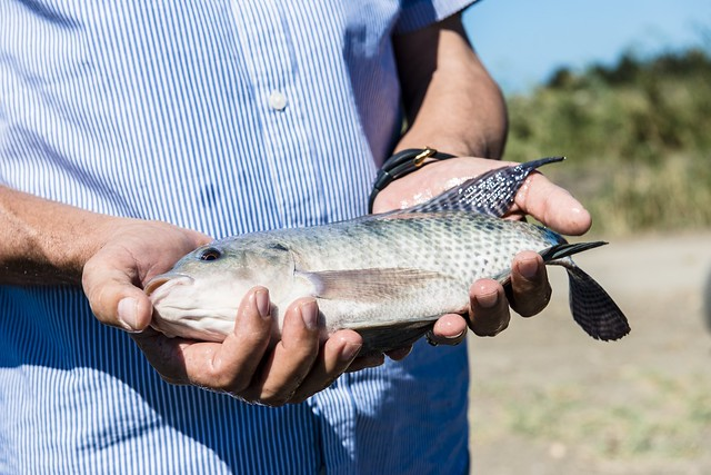 Switzerland worldfish and care to support youth for Fish hatchery jobs