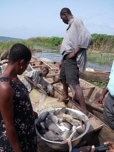 Small-scale fisheries, Lake Volta, Ghana. Photo by Curtis Lind, 2009.