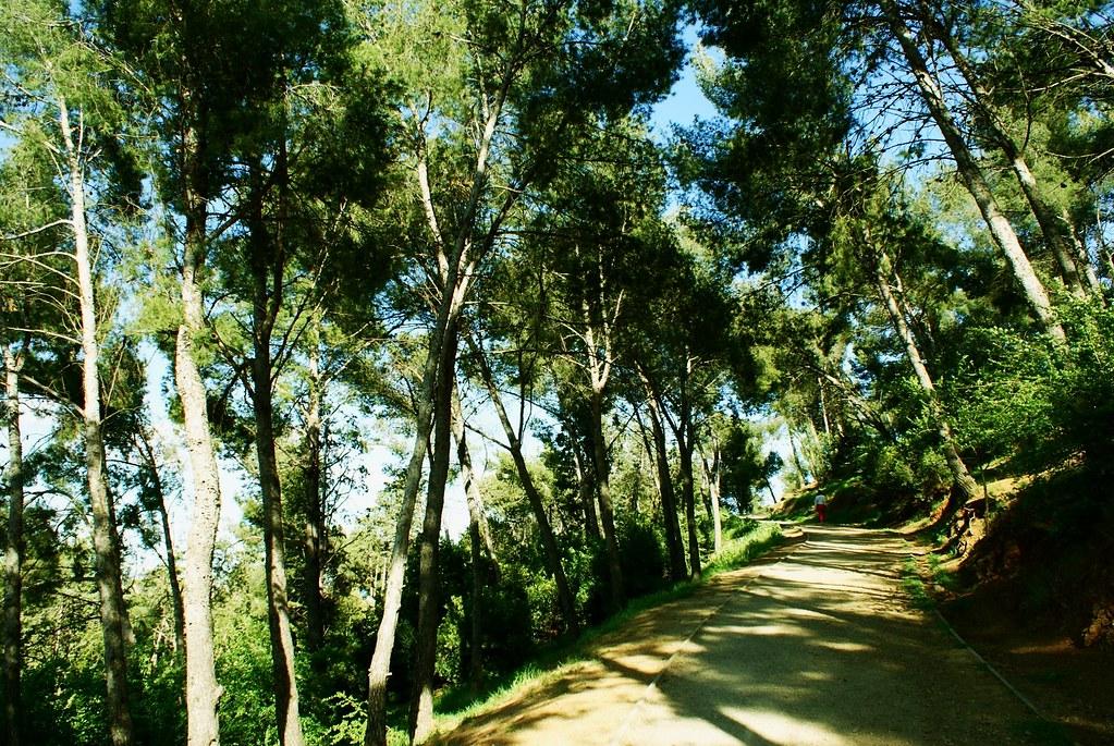 Sentiers pédestres dans la forêt de pins du parc du Guinardo à Barcelone.