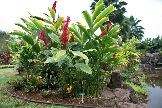 Zz Plant Varieties