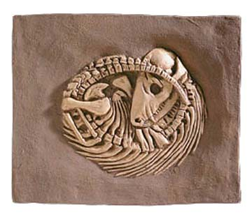 Thrinaxodon Sp Triassic Fossil Reproduction Cute Early