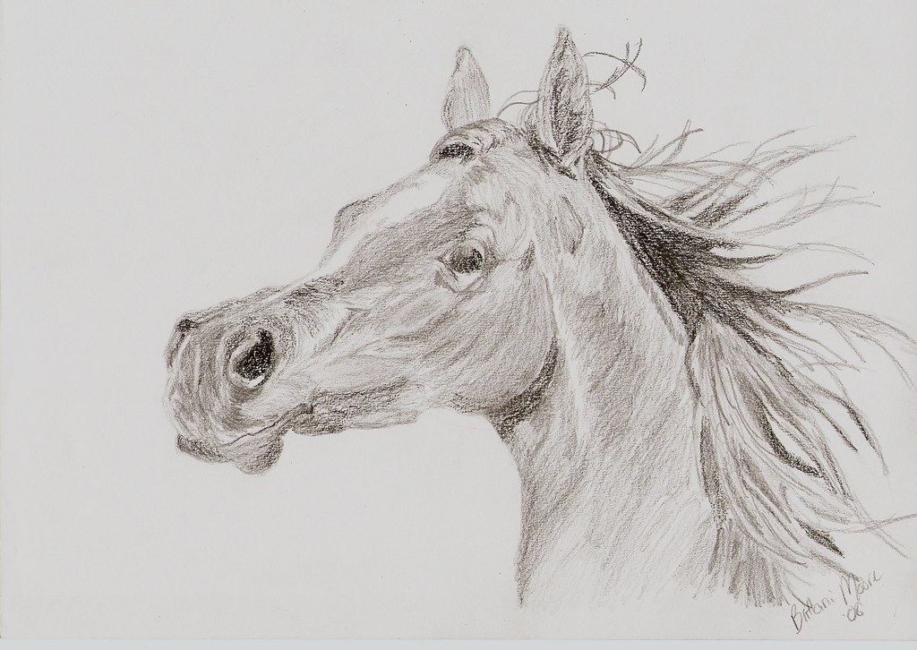 Arabian Horse Head | this drawing is a little darker in ...
