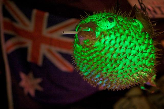 Smoking english puffer fish lamp from apple jacks dave for Puffer fish lamp