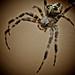 My friendly neighbourhood spider