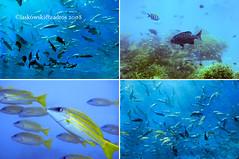Ithaa Underwater Restaurant, Conrad Maldives
