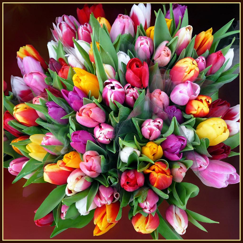 Дорогой цветов стих