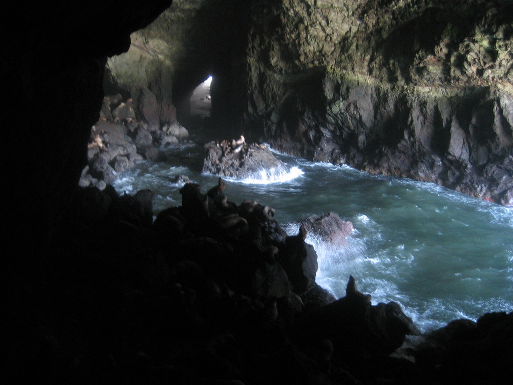 Sea Lion Caves - Oregon | Sea Lions in the cave. | Flickr