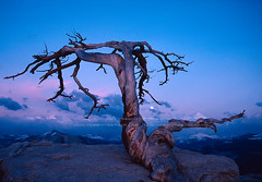 Yosemite's famous Jeffrey Pine on Sentinel Dome | by Chris Falkenstein Photography & Video