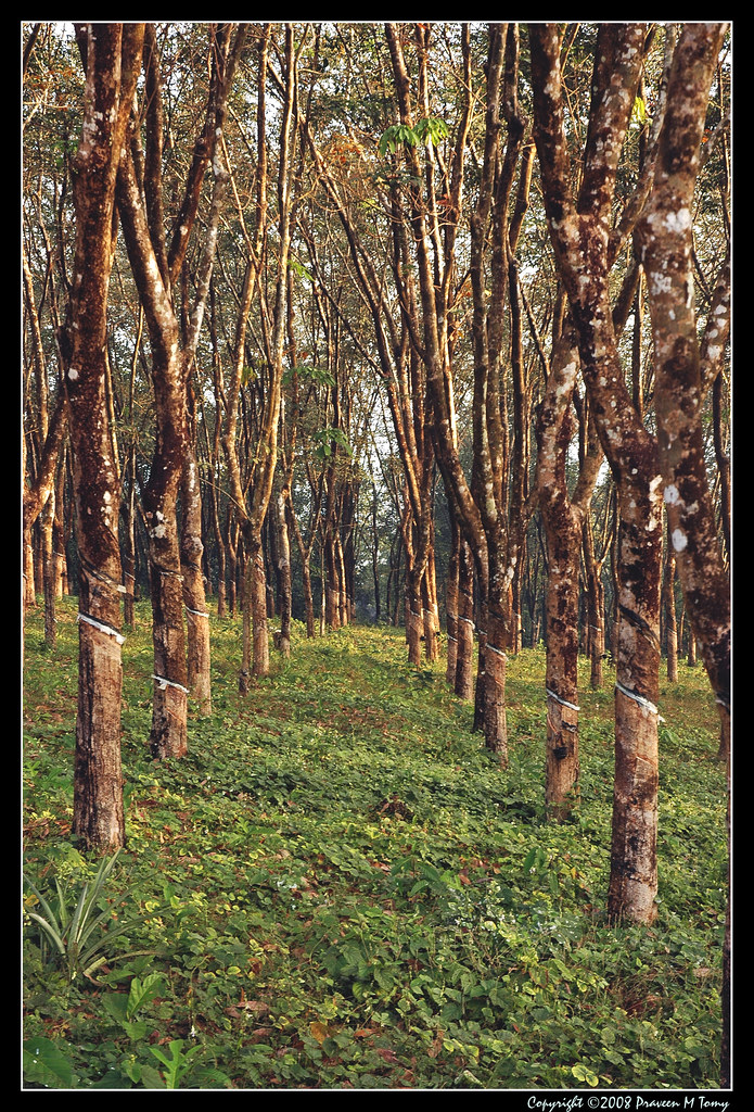 Climate Map Of Indonesia Rubber Plantation   Ru...