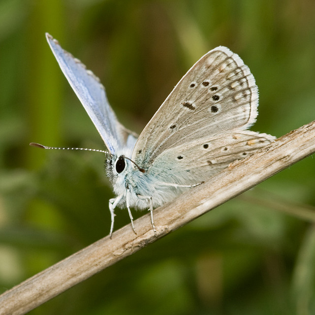 research papers on butterfly taxonomy