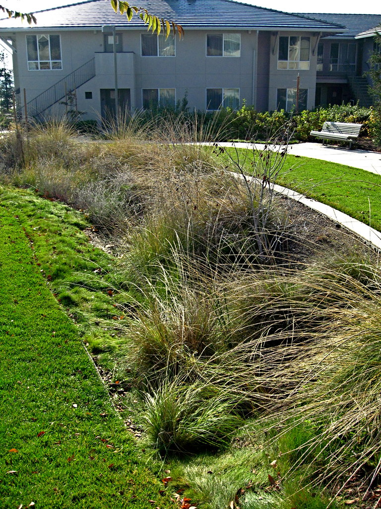 Linear Rain Garden Bioswale Drainage An Example Of