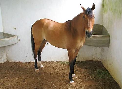Cavalo Em Uma De Nossas Baias Tenho Baias De Aluguel