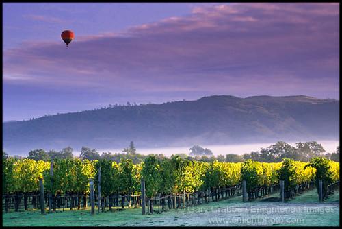 Hot Air Balloon Over Napa Valley Vineyards Hot Air