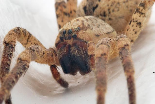 Macro araignee 01 une jolie araign e dans ma salle de bain benjamin ziegler flickr - Une araignee dans la salle de bain ...