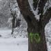 Trees 0060