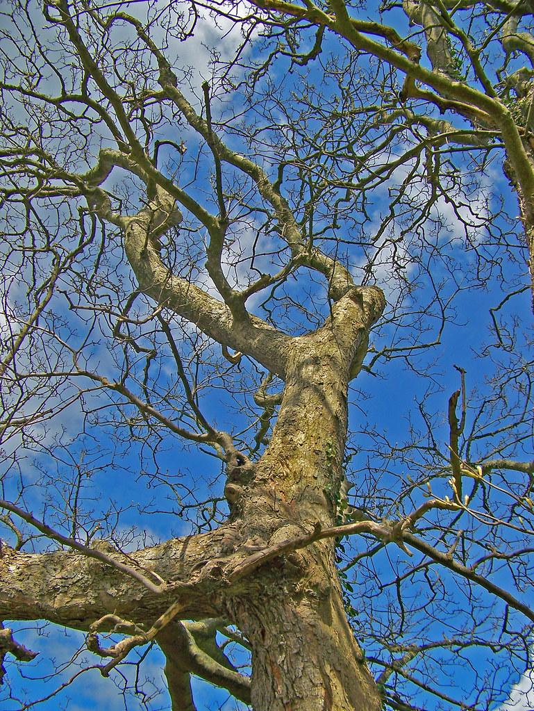 Bare trees fleetwood mac anyone des d mona flickr