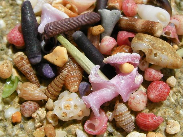 miniature sea shells 3