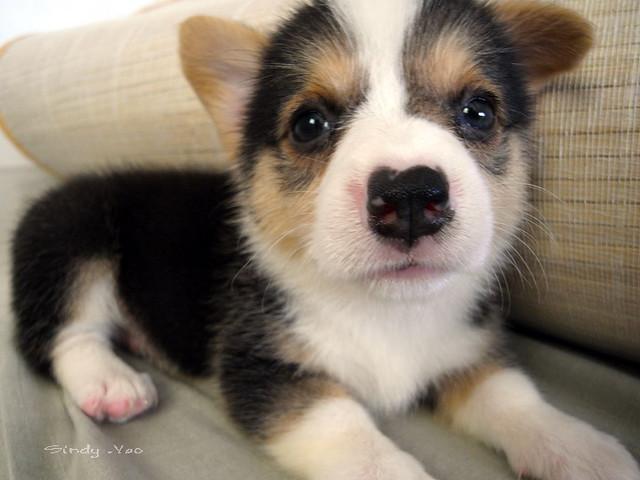 Tiny White Fluffy Dog Breed