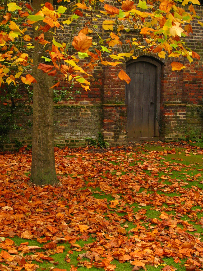 Autumn Leaves in Osterley Park | Laura Nolte | Flickr