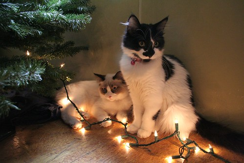 Light-up Cats | by kateschmidt