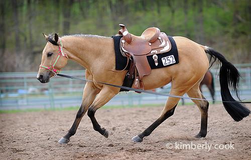 Buckskin quarter horse stallion - photo#26