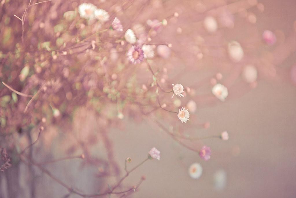 Retro Flowers | Evenin...