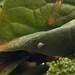 Leafy Terrain