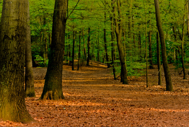 all sizes forest high contrast flickr photo sharing