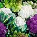 cauliflower (coliflor), Deering Oaks Park Farmers' Market, Portland, Maine