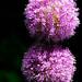 Purple balls
