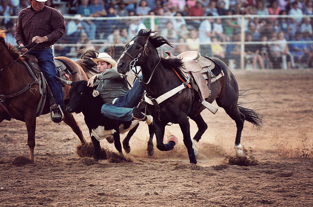 Steer Wrestling Flickr Photo Sharing
