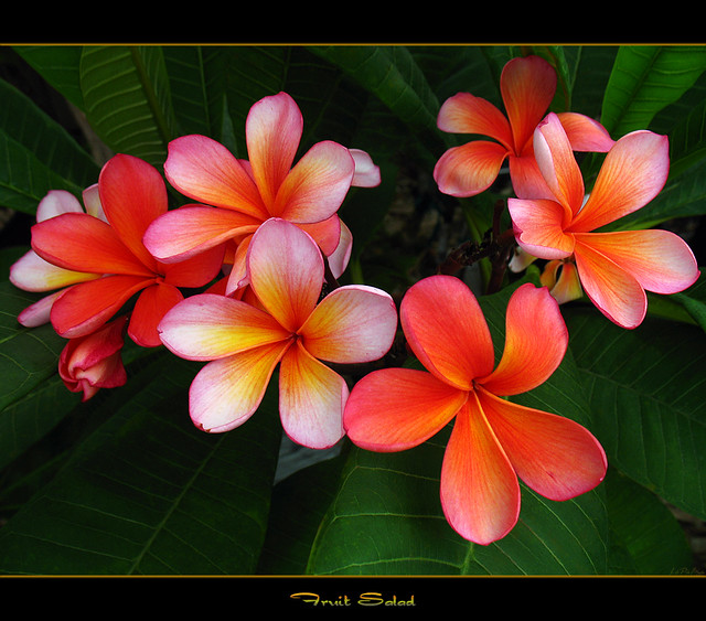 Tropical Flowers Images  Pixabay  Download Free Pictures