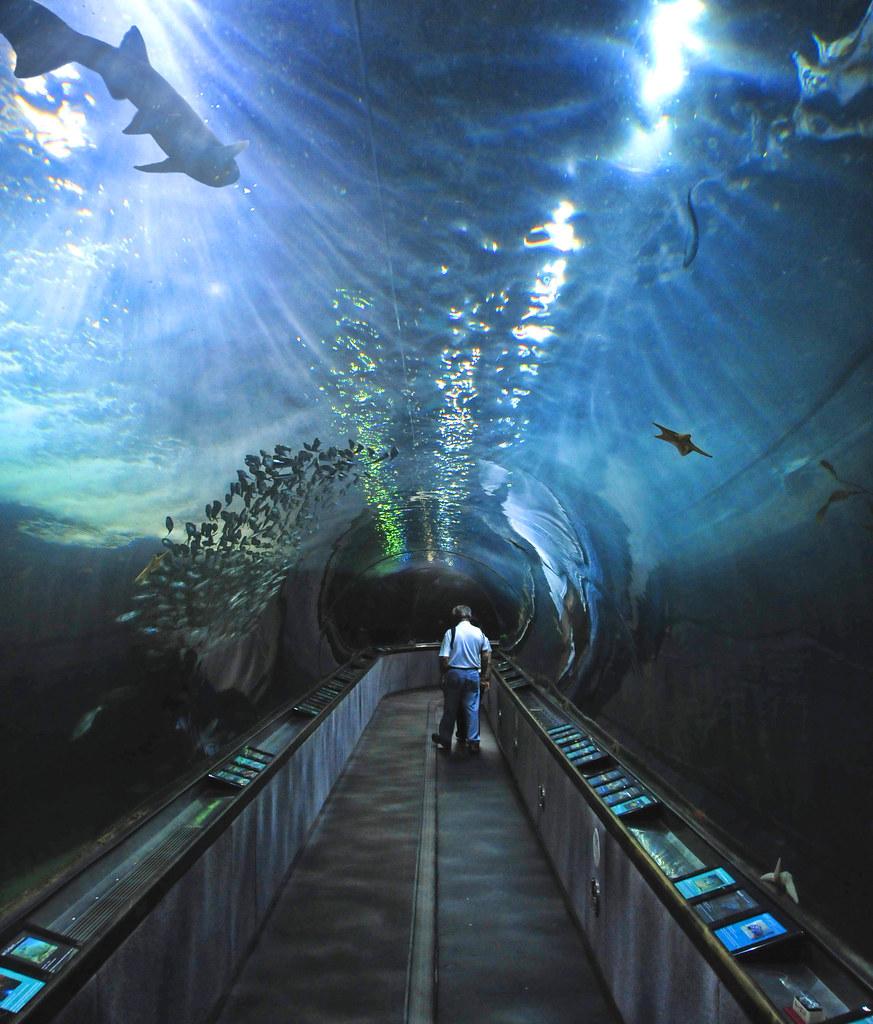 Aquarium Of The Bay 66 Tom Flickr